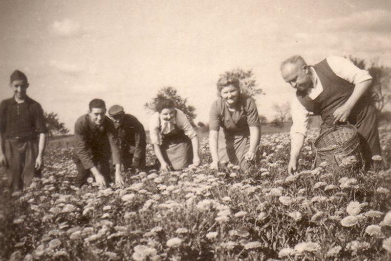 1930 kraeutermix
