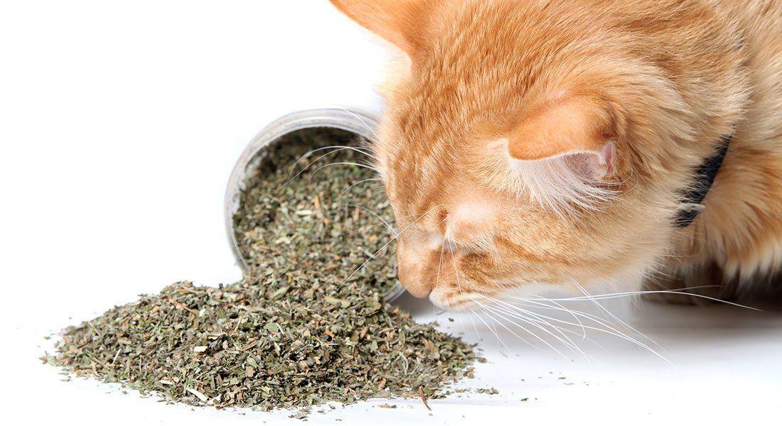 Heilpflanzen für die Tiergesundheit